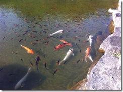 京カントリー池